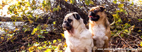 Pugs in the Park Timeline