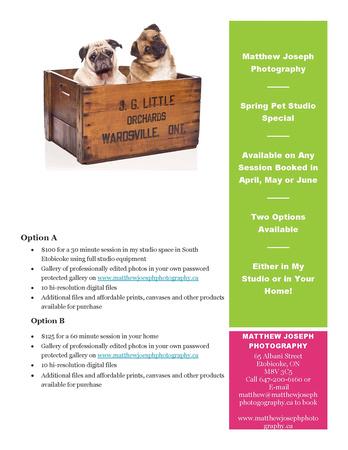 Spring Pet Studio Flyer